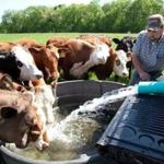 Mike Austin at Austin Brothers Valley Farm in Belchertown went from dairy farming to beef cattle. He now has about 35 customers who pick up their beef at a half-dozen sites, and he hopes the business can grow while allowing for good practices.